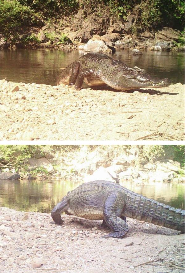 ภาพจาก : ประชาสัมพันธ์ กรมอุทยานแห่งชาติ สัตว์ป่า และพันธุ์พืช