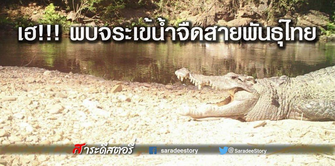 พบจระเข้น้ำจืดสายพันธุ์ไทย